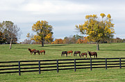 Kentucky Horse Park Framed Prints - Bluegrass Autumn Framed Print by Roger Potts