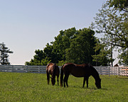 Kentucky Horse Park Paintings - Bluegrass Summer Day by Roger Potts
