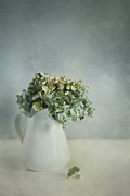 Hydrangea Photos - Blues by Priska Wettstein