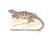 Illustration Painting Originals - Blunt-nosed Leopard Lizard  by Cindy Hitchcock
