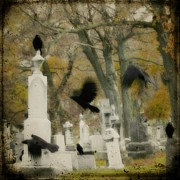 Birds In Graveyard Prints - Blur Of Crows Print by Gothicolors And Crows