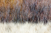 Fall Grass Prints - Blurred brown winter woodland background Print by Elena Elisseeva