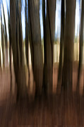 Trees Abstract Tree Lines Forest Wood Prints - Blurred LInes Print by Roni Chastain