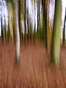 Chris Brink - Blurred trees