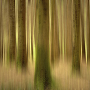 Surreal Photos - Blurred trunks in a forest by Bernard Jaubert