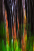 Jurica Lenard - Blurry forest 3