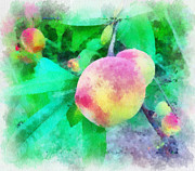 Peaches Digital Art Prints - Blush Print by Chris Gibbons