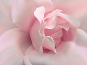Macro Flower Prints - Blushing Pink Rose Flower Print by Jennie Marie Schell