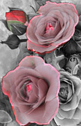 Timeless Design Mixed Media Prints - Blushing Rose Print by Debra     Vatalaro