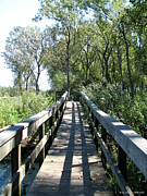 City Of Refuge Prints - Boardwalk at Tifft Nature Preserve Buffalo New York Print by Rose Santuci-Sofranko