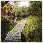 Marsh Path Framed Prints - Boardwalk  Framed Print by Les Cunliffe