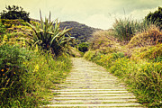 Sand Dunes Posters - Boardwalk Through Bush New Zealand Poster by Colin and Linda McKie