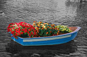Florida Florals Photos - Boat Parade by Aimee L Maher