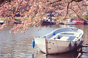 Sakura Prints - Boat Under Blooming Cherry Tree. Pink Spring in Amsterdam. Print by Jenny Rainbow