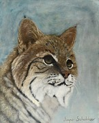 Bobcat Originals - Bob by Jayne Schelden