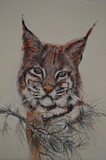 Bobcat Originals - Bobcat by Dorothy Campbell Therrien