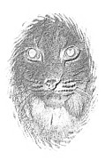 Bobcat Drawing Prints - Bobcat in Charcoal Print by Maria Urso