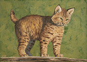 Big Cats Paintings - Bobcat Kitten by Crista Forest