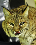 Cherie Haines - Bobcat Lunch