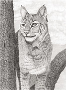 Bobcat Drawings Posters - Bobcat Poster by Paul Treadway