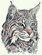 Bobcat Drawing Drawings Posters - Bobcat Portrait Poster by VLee Watson