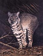Bobcat Print by Ricardo Chavez-Mendez