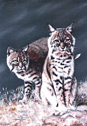 Bobcat Paintings - Bobcats in the Hood by DiDi Higginbotham