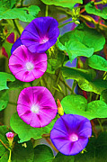 John Haldane Paintings - Bohemian Garden Morning Glory by John Haldane