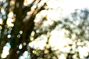 Tree In Golden Light Art - Bokeh Fest by Steven Poulton