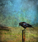 Bird On A Wire Prints - Bold Amiable Ebon Outlaw Print by Theresa Tahara