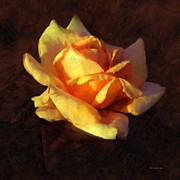 Orange Rosebud Posters - Bold Glow Poster by RC deWinter