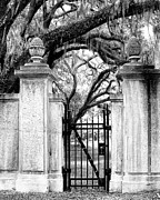 Oaks Framed Prints - BONAVENTURE CEMETERY BW Savannah GA Framed Print by William Dey