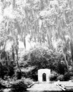 Mossy Trees Prints - BONAVENTURE GRAVESITE Savannah GA Print by William Dey