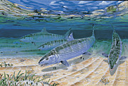 Blue Marlin Paintings - Bonefish Flats In002 by Carey Chen
