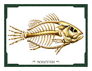 Jon Q Wright Framed Prints - Bonefish Framed Print by JQ Licensing