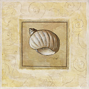 Seashell Painting Framed Prints - Bonnet Shell Framed Print by Pablo Esteban