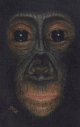 Primates Originals - Bonobo #1 by Rebekah Sisk