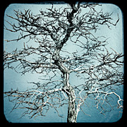 Gary Heller Metal Prints - Bonsai Metal Print by Gary Heller