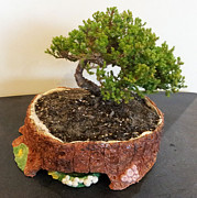 Gardening Ceramics - Bonsai Pot by Clifton Sears