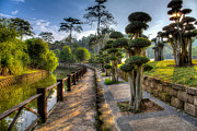 Mario Legaspi Metal Prints - Bonsai Trail Metal Print by Mario Legaspi