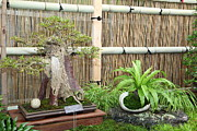 Miniature Prints - Bonsai Treet - US Botanic Garden - 01132 Print by DC Photographer