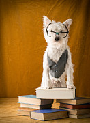 Glasses Photos - Bookish Dog by Edward Fielding