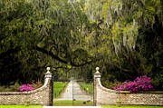 Tree-lined Posters - Boone Hall Plantation Poster by Eggers   Photography