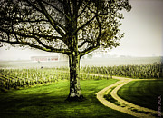 Cheval Posters - Bordeaux Vineyard Poster by John Jack