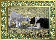Border Pastels - Border Collie And Lamb Christmas by Olde Time  Mercantile