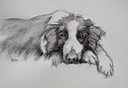 Collie Mixed Media Originals - Border Collie by Cynthia House
