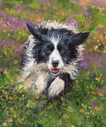 David Stribbling - Border Collie