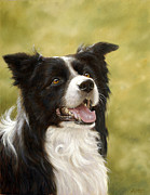 Dry Lake Paintings - Border Collie head study by John Silver