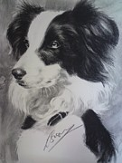 Border Drawings - Border Collie by Louise Brown