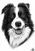 Border Collie Drawing Posters - Border Collie Poster by Nicole Zeug